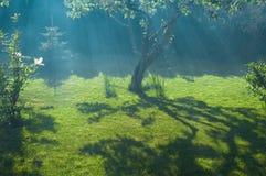 Frog, sun and peaceful garden Royalty Free Stock Photos
