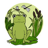 Frog in swamp at lily leaf in canes with dragonflies. Stock Image