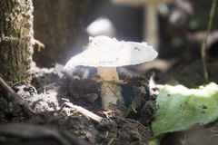 Frog taking shelter under a mushroom Stock Photo