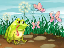 A frog and the three butterflies Royalty Free Stock Photography