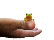Frog on Thumb Royalty Free Stock Photos