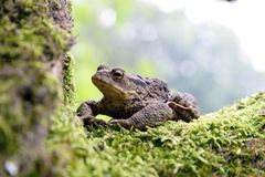 Frog toad Stock Photography