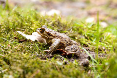 Frog Toad sitting Stock Photo
