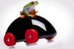 Frog and Toy Stock Images