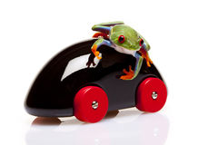 Frog and Toy Royalty Free Stock Photos