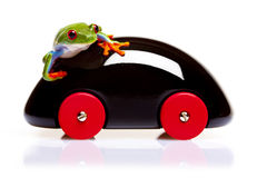 Frog and Toy Stock Image