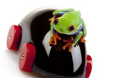 Frog and Toy Royalty Free Stock Images