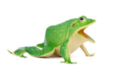 Frog toy Stock Photo