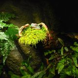 Frog at the tree. royalty free stock images