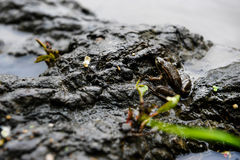 Frog on the tree in river. Sweet Little Frog Sitting Near Water Royalty Free Stock Image