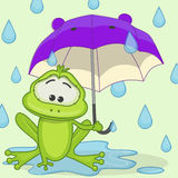 Frog with umbrella Stock Photos