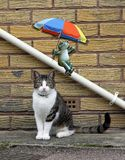 Frog with umbrella parasol sliding down drainpipe and cat posing portrait stock photo