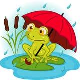 Frog under umbrella Royalty Free Stock Image