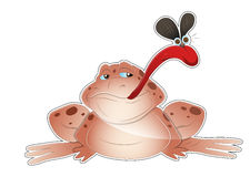 Frog Vector Royalty Free Stock Images