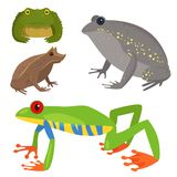 Frog vector cartoon tropical wildlife animal green froggy nature funny illustration toxic toad amphibian. Wild funny forest nature hop character Stock Photos
