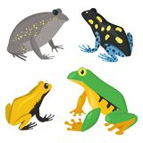 Frog vector cartoon tropical wildlife animal green froggy nature funny illustration toxic toad amphibian. Wild funny forest nature hop character Royalty Free Stock Images