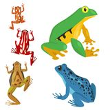 Frog vector cartoon tropical wildlife animal green froggy nature funny illustration toxic toad amphibian. Wild funny forest nature hop character Royalty Free Stock Photo
