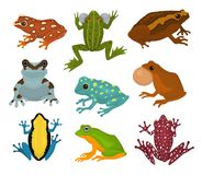 Frog vector froggy character and cartoon amphibian toad in tropical nature illustration set of fauna exotic treefrog and. Bullfrog isolated on white background Stock Photos