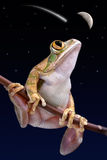 Frog watching shooting star Stock Image