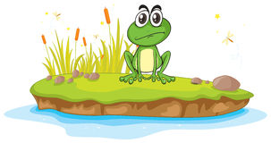 A frog and a water Stock Photography