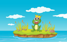 A frog and a water Stock Images