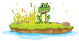 A frog and a water Royalty Free Stock Photography