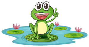 A frog and a water Royalty Free Stock Image