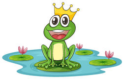 Frog and water Royalty Free Stock Photography