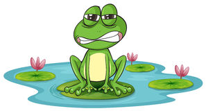 A frog and a water Royalty Free Stock Photos