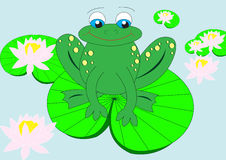 Frog on water lily. In water Royalty Free Stock Photo