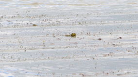 Frog in the water stock footage