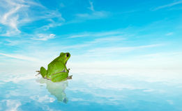 Frog on the water under a blue sky. Green frog on the water under a blue sky Royalty Free Stock Photo