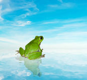 Frog on the water under a blue sky Royalty Free Stock Image