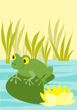 Frog on waterlily. A cheerful cartoon frog sitting on water lily leaf in the middle of a pond Royalty Free Stock Images