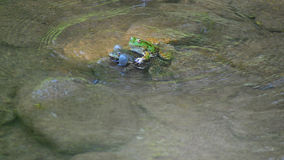 Frog in the wather Stock Photo