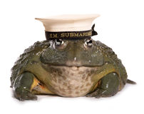 Frog wearing a HM submarine hat Stock Photo
