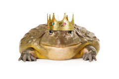 Frog Wearing Prince Crown Stock Images