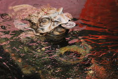 Frog Of Weath. A frog of wealth in ancient chinese beliefs to bring wealth and ward off evil royalty free stock photo