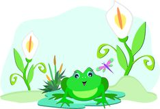 Frog with White Lilies Royalty Free Stock Photography