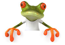 Frog with a white tshirt Stock Photos