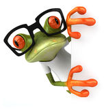 Frog with a white tshirt Stock Photo