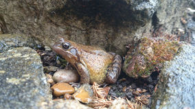 FROG. The world of creatures great and small Royalty Free Stock Images