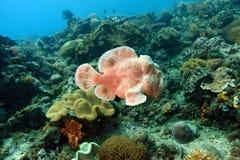 frogfish Стоковое Фото