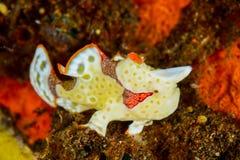 Frogfish Lizenzfreies Stockfoto