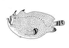 Frogfish, deepwater fish. Hand drawn realistic illustration