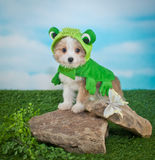 Frogger Puppy