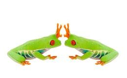 Froggie alti cinque Immagini Stock