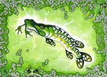 Frogging Stock Images