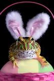 froggy пасхи Стоковое Изображение