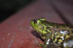 Froggy froggy Στοκ Φωτογραφία